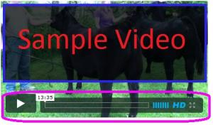 Video Navigation