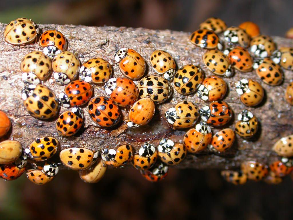 Beetles/ladybugs