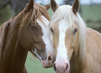 image of two horses