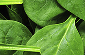 spinach leaves - small