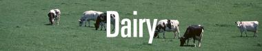 Dairy Staff Page