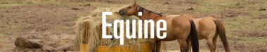 Equine Staff Page
