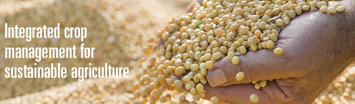 image of soybeans in hands