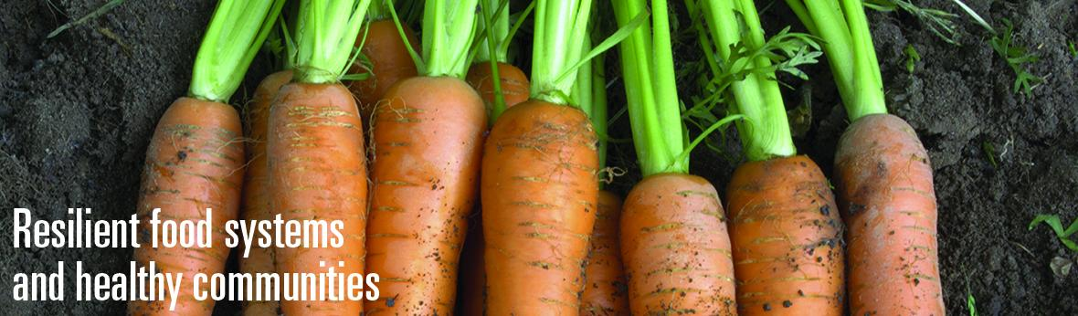 image of freshly harvested carrots