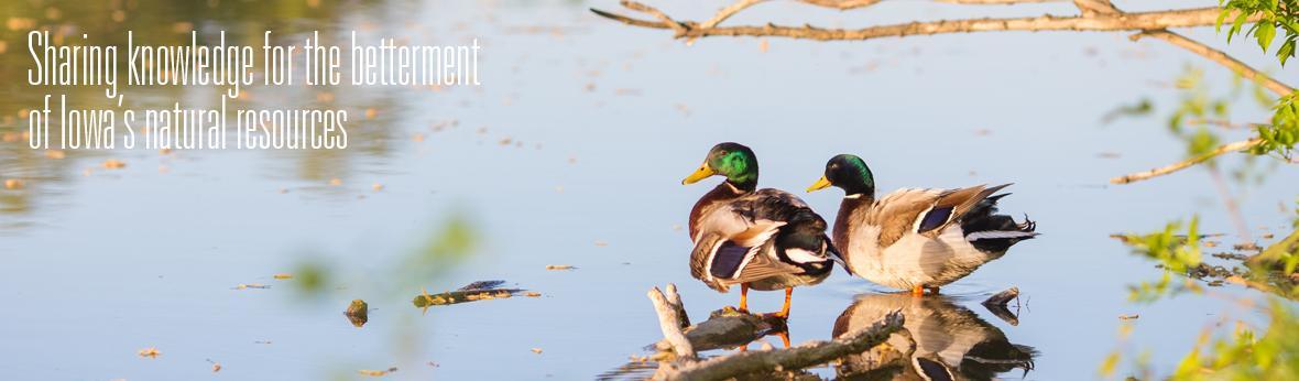 two ducks standing in water