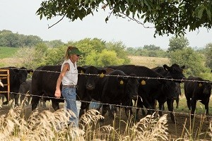 Woman with feed bucket and cattle