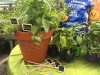 Potted herb plants