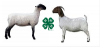 sheep and meat goat
