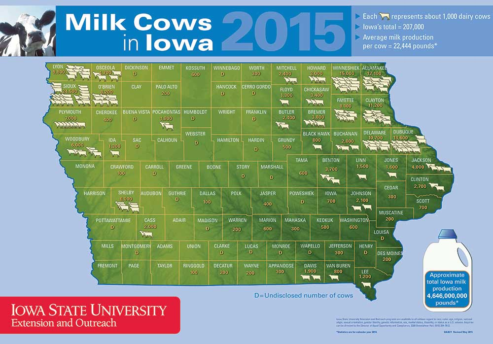 Milk Cows in Iowa
