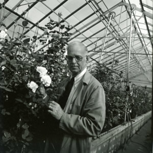 Dr. Buck evaluating his roses