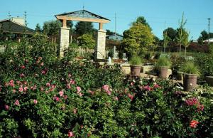 Jones Rose Garden, Reiman Gardens, Iowa State University