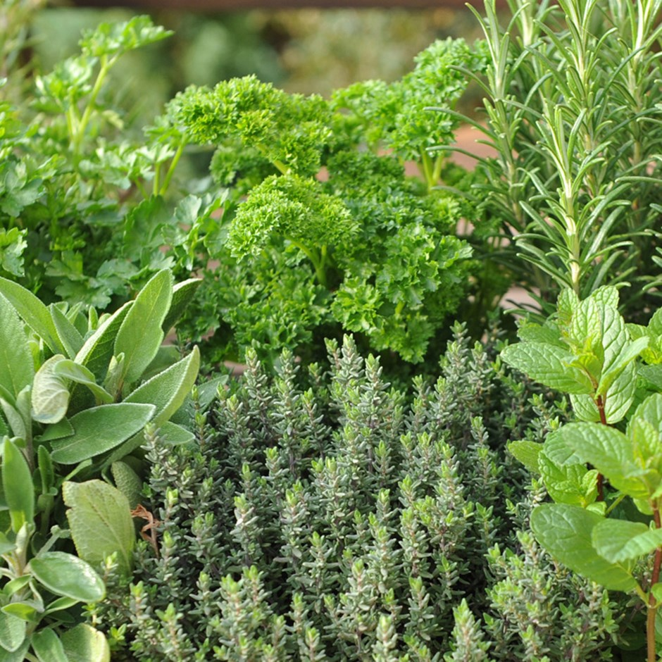 a variety of herb plants