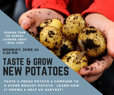 freshly dug new potatoes in a child's hand with event details