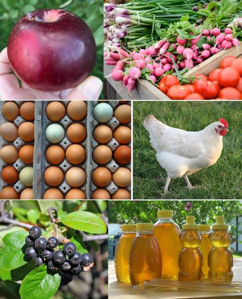 collage of locally produced food - apple, vegetables, eggs, chicken, aronia berries, honey