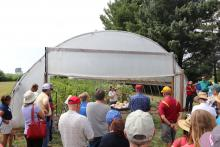 demonstrating small melon varieties that were trellised in a high tunnel