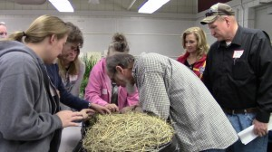 Master Equine Managers Evaluating Hay