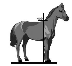 Measuring horses