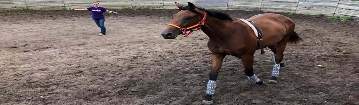 Horse Training Class