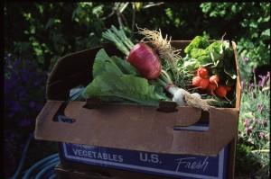 Box of CSA Vegetables