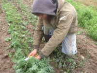Sinsinawa Mound Collaborative Farm: Serving the community through agriculture