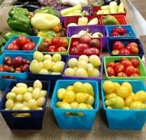 tomatoes food entrepreneurs