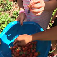 Bowl of strawberries.