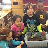 Group of preschool students at table with tub of sprouting seeds.