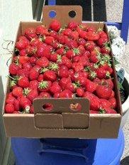 Berries from Gedding's Garden