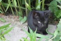Kitten at Cottonwood Farms