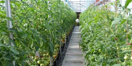 Financing for Commercial Horticulture