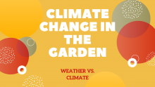 climate in the garden