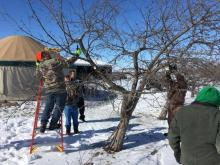 Pruning at Allee Research Farm