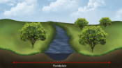 illustration of river with trees