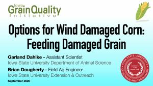 feeding damaged grain