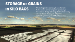 Explanation of silo bags - can see numerous silo bags on a field with a nice blue sky