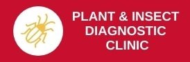 Plant and Insect Diagnostic Clinic Button