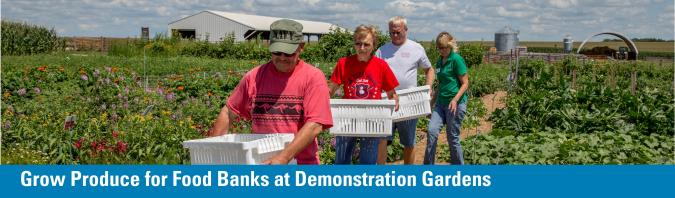 Grow Produce for Food Banks at Demonstration Gardens - image of Master Gardeners harvesting produce in July