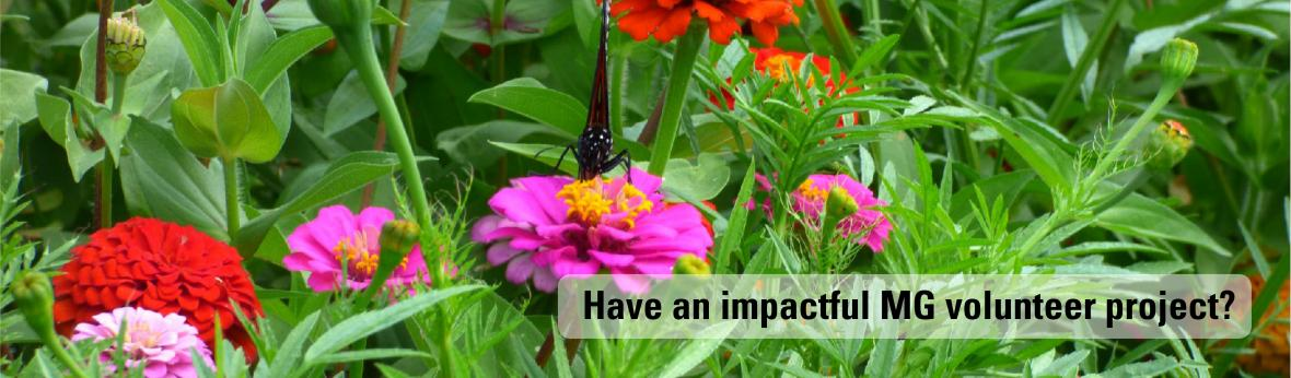 Do you have an impactful Master Gardener volunteer project?