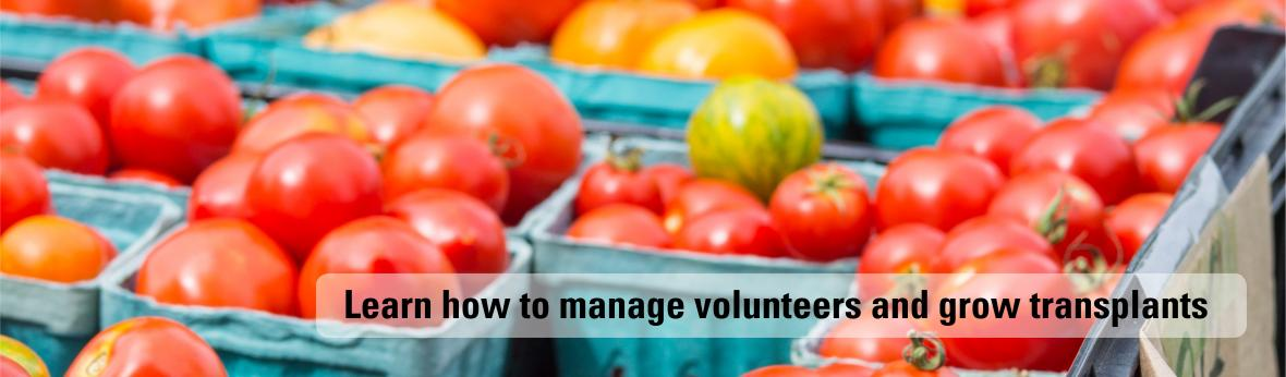 Learn how to manage volunteers and grow transplants