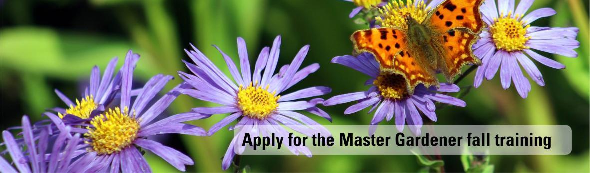 Apply for the Master Gardener fall training