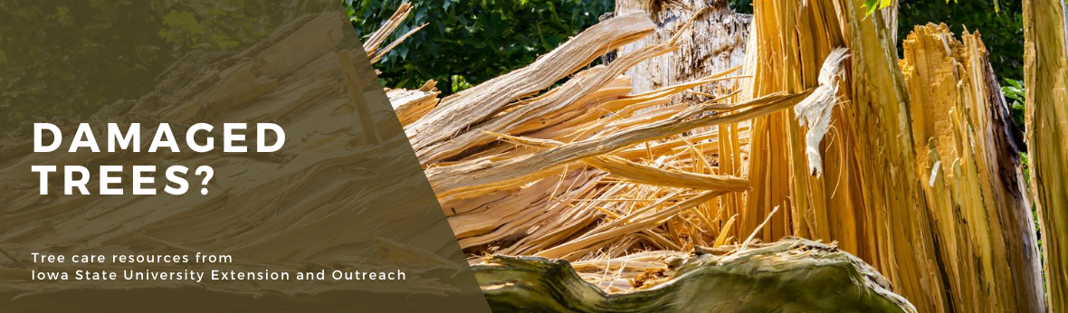 Damaged Trees? Tree care resources from Iowa State University Extension and Outreach