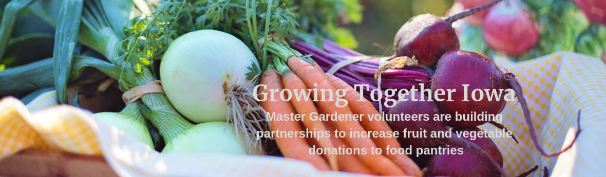 Growing Together Iowa- Master Gardener volunteers are building partnerships to increase fruit and vegetable donations to food pantries