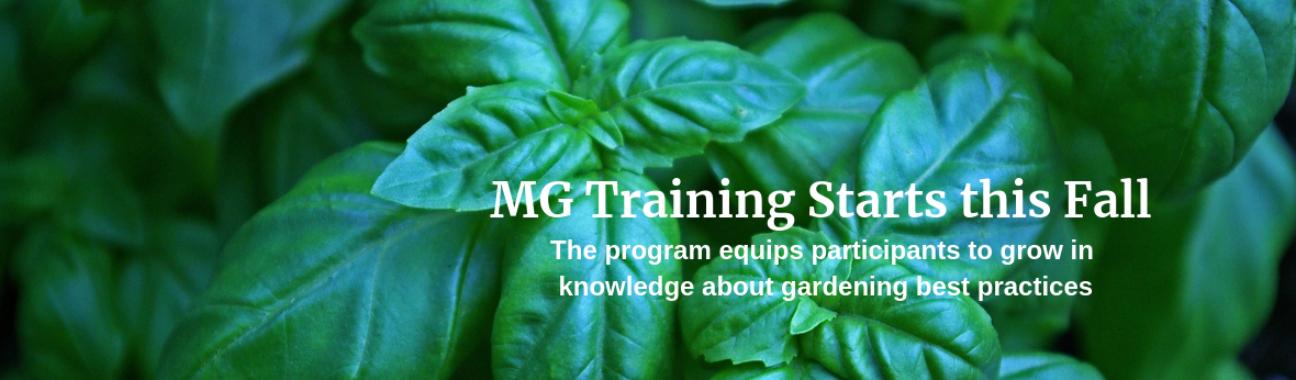 MG Training Starts this Fall: The program equips participants to grow in knowledge about gardening best practices
