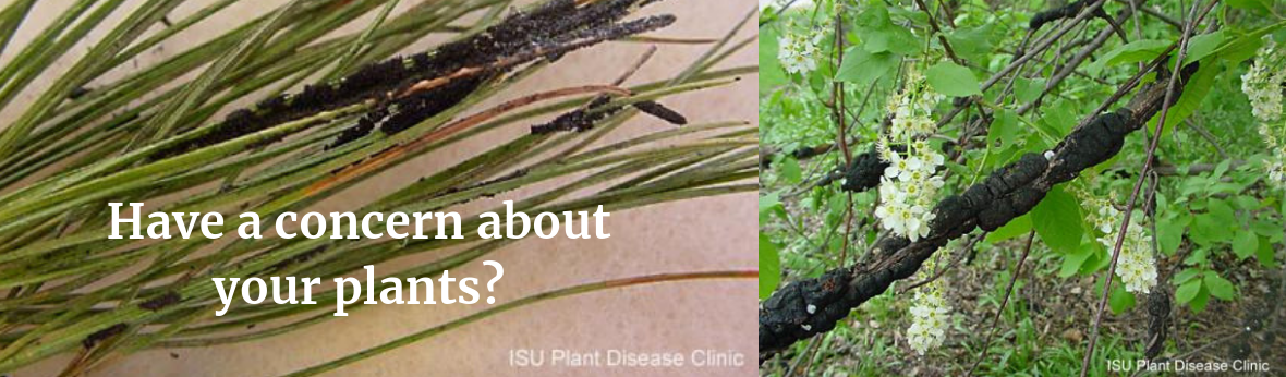 Have a concern about your plants? ISU Plant Insect Diagnostic Clinic