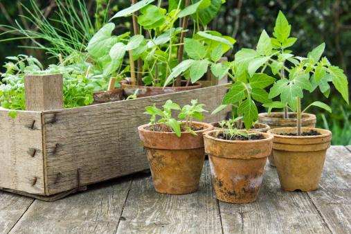Yard And Garden Container Gardening News