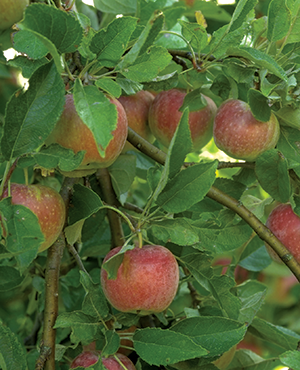 Yard And Garden Growing Fruit Trees News
