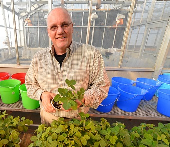 Gregg Tylka holding greenhouse soybean plants.