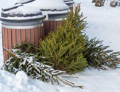 Christmas tree disposal by Hanna/stock.adobe.com