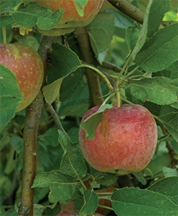 When Should I Prune My Fruit Trees