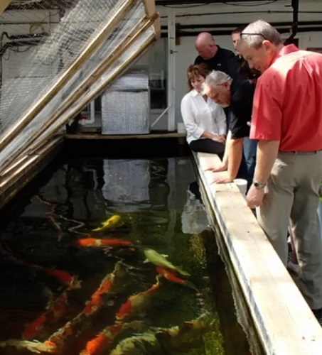 people looking into a fish farm tank.